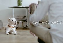 "CLOUD7 SPOT / Watch this fun film of little Terrier ""Atze"" showing his owner who is the boss in the house."