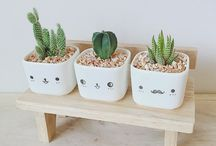 cactus / i just can take care of cactus