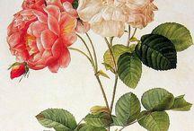 aquarelles florales anciennes