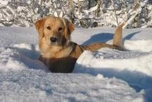 Snow-loving Animals!