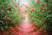 Flowers / by Inner Sight | Isha Lerner Enterprises
