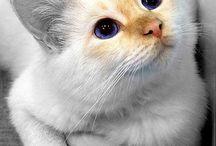 Animals ❤️❤️❤️ / Vari tipi di gatti