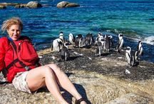 Sea Kayaking Penguins Discovery Trip As from  $20.65 / Definitely the most popular kayaking trip CapeTownAttractions offers is the one to visit the penguins.