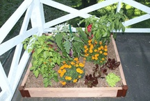Green roofs & walls / This and that on green roofs and vertical gardens