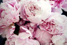 Blommor-Blumen