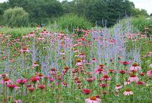 garden \\ planting \\ dry&sunny garden