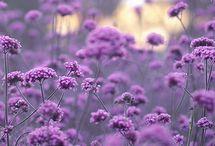 Květiny ⚘