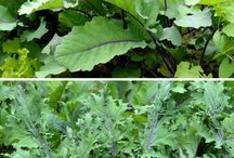 Veggies in the shade