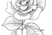 Drawing roses