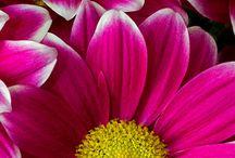 Flowers / by Lynn Williams