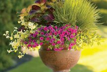 Gardening Ideas / Everything looks better with Flowers!