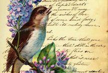 szöveg madár transzfer színes / bird text Vintage transfer transzfer colorful