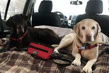 Traveling with Dogs / Gear for traveling with Dogs