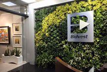 Indoor Plants - Interest Pieces