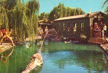 Knotts Berry Farm / by Brad Driver