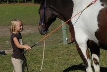 Horse handling/games/training
