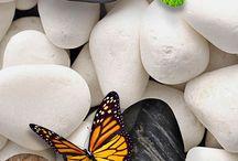borboletas no jardim
