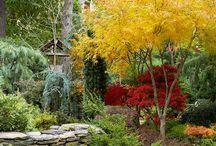 Teenaka garden