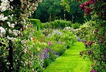 jardin / by Francisca Jimenez