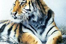 Vackra bilder på djur