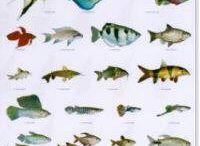 Vissen-Aquarium