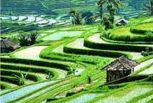 Beautiful Bali - our island love / Bali - magical island to many