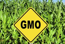 Avoiding GMOs / Information on how to eat the safest, healthiest foods