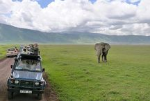Tanzania Tour Operator / Plan Your Trip to Tanjania