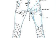 人体 解剖的