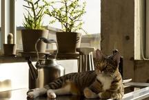 animal decor models / by Tiffany Brommerich Kotz