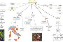 mappe storia