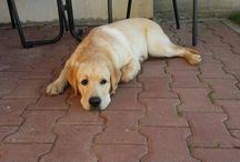 Charlie,  the dog / Dog