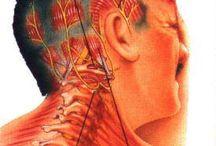 Health - Migraine