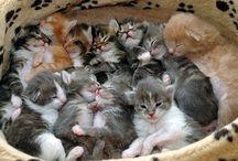 Gattini -Pisicuti