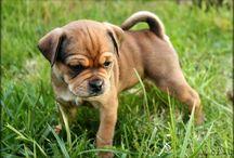 pups / by Jenni Busta