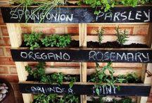 Projetos de jardim