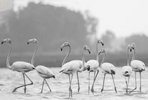 Wildlife Sanctuaries in Gujarat / Sanctuariesindia: Here you can get information about all Wildlife Sanctuaries, Forests, Parks in Gujarat, India.