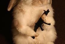 Animal - Bunny! / by Christin Little
