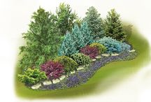 Fence hedge plants