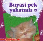 pisipalas kedi pansiyonu istanbul / www.pisipalas.net