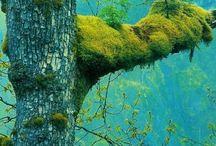Trees.... I love trees u know ( cbr 1 quote )