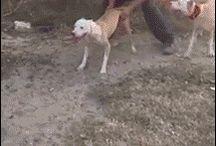 Perros espaculares