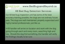 K9 Bed Bug Detection Services / Here you will find an exceptional range of K9 Bed Bug Detection Services offered by skilled and well-experienced experts in the detection of bed bugs. Bed Bugs & Beyond now introduces K9 Bed Bug Detection Services that not only detects creepy looking creatures hidden in your space but even kill them. Call us to know more! http://goo.gl/gMpJyo