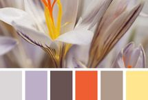 Wall paint colors for house / by Lisa Diaz