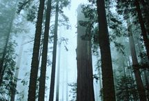 Trees / Bomen met uitstraling