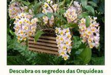 orquídeas tratamento