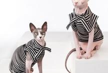 Feline Fashionistas / by catsparella