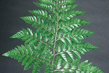 Green it up / Foliage for flower arrangements  / by Elizabeth Davis