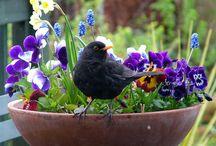 Bird, black feathers~