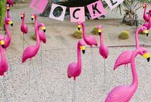 ls flamenk@s me persiguen | flamingos all around